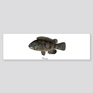 Tautog Bumper Sticker